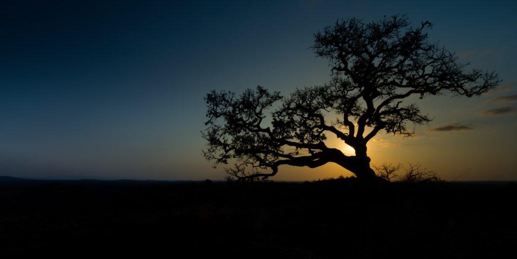 rejse til afrika paa ferie trae mod solnedgang 1024x514