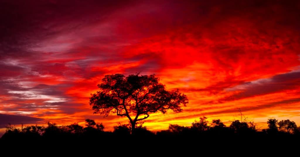 smuk solnedgang i kruger national park i sydafrika 1024x539