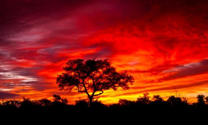 smuk solnedgang i kruger national park i sydafrika 700x420